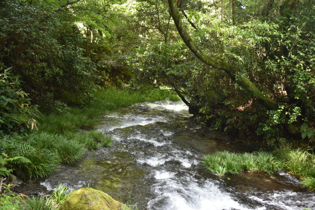 La rivière Shirakawa, au milieu des bois