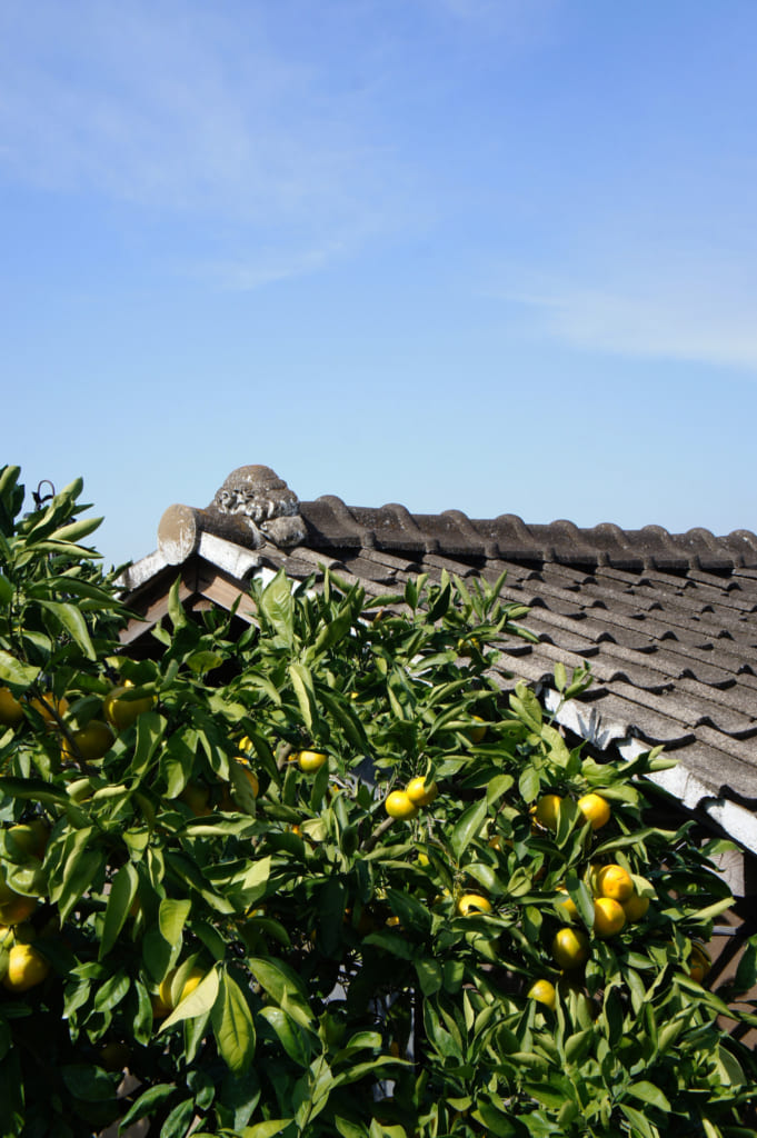 Agrumes devant un toit traditionnel au Mizumoto Orange Garden