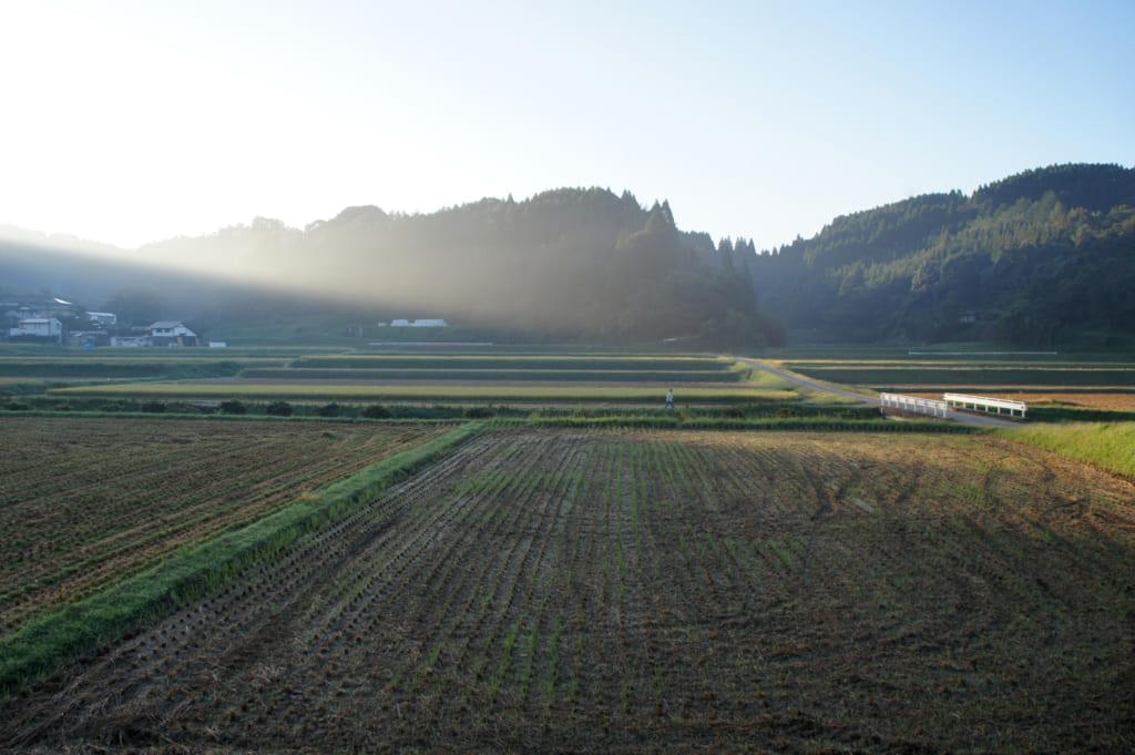 Les rizières de Kikuchi dans la lumière du petit matin
