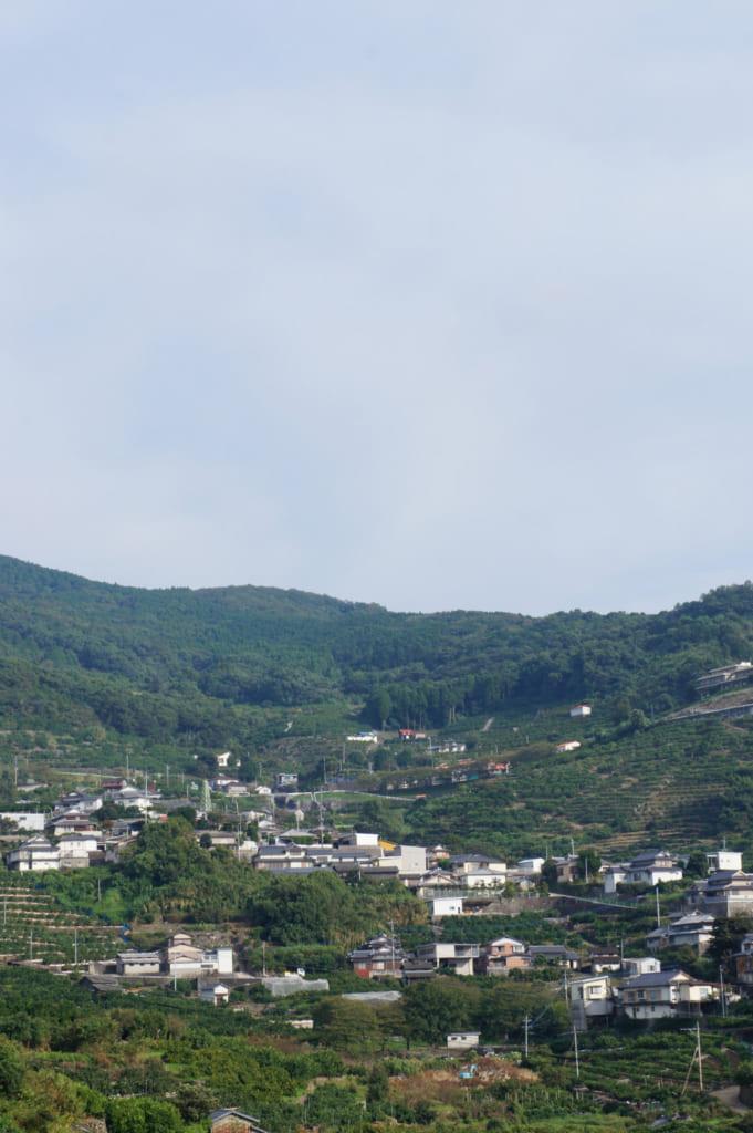 Vue sur le paysage planté d'agrumes depuis le Kusamakura onsen Tensui