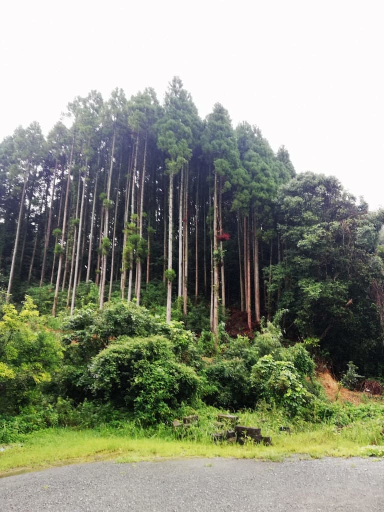 forêts à proximité de Hirayama Onsen