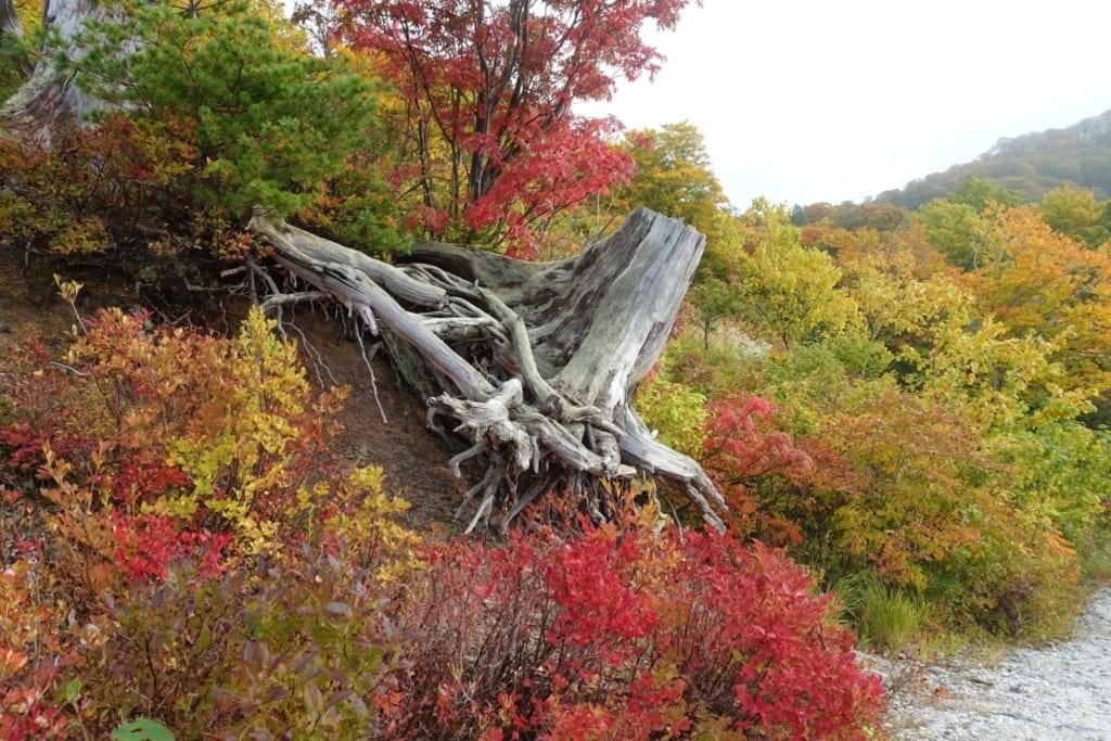 Les magnifiques couleurs de l'automne japonais dans la préfecture d'Akita