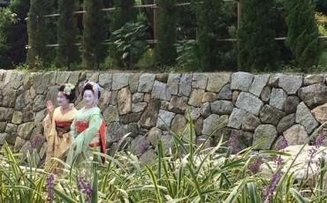 Meet Maiko, a Geisha in training!