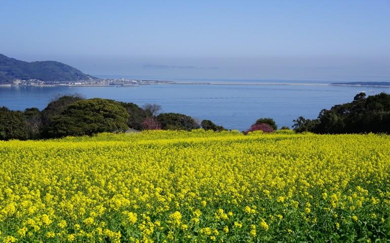 Fukuoka, bicycle, outdoors, nature, flower, island, scenery