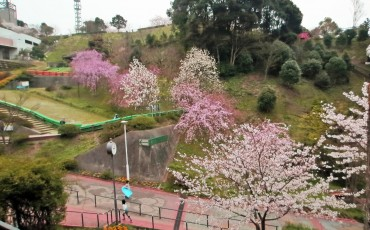Sakura, Cherry blossom, Castle, Park, Mountain, Hiking, Slide, Hanami