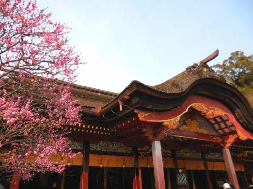 plum blossom tree and shrine in Dazaifu, Fukuoka