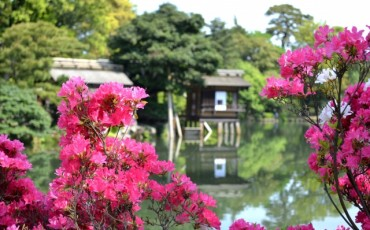Kenrokuen,garden,cherry blossom,seasons,kanazawa