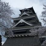 Gazing at cherry blossoms and history: hanami at Kumamoto Castle