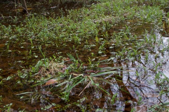 small swamp or marshland in Kamakura