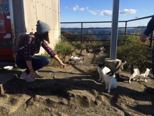 cats on Nokogiriyama mountain