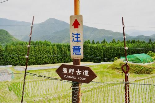 Kumano Kodo offers a beautiful hiking and temple experience