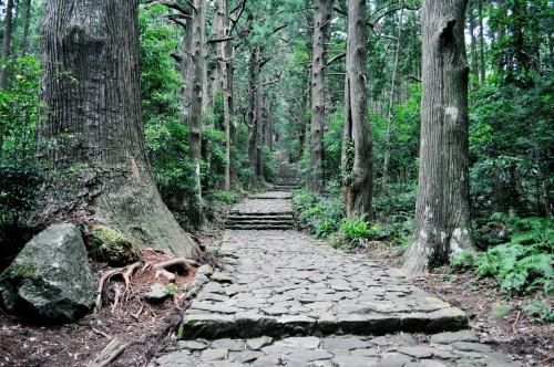 immense scenery and outdoors of Kumano Kodo