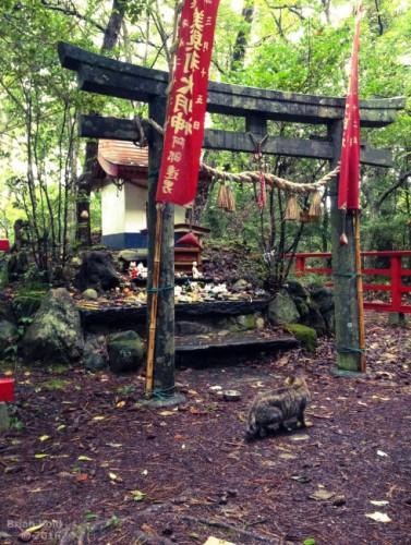 a small shrine dedicated to cats and Nekokamisama in Tashirojima Japan