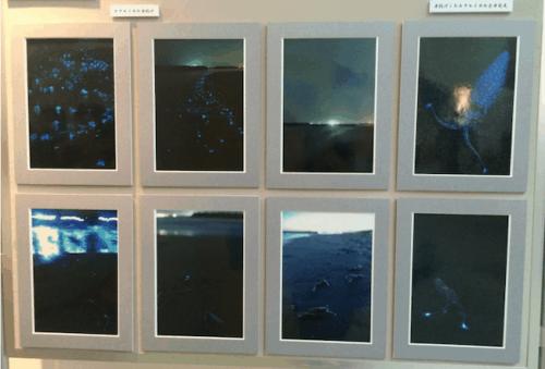 photographs hotaruika