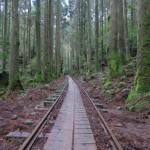 The 9 Hour Hike to Wilson Stump and The Great Jomon Sugi at Yakuhisma