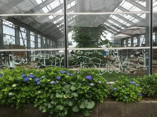 A nice garden in green tea house