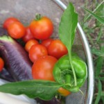 Life on the farm in Oita