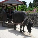Traveling Back in Time on Taketomi Island, Okinawa