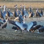 Izumi, a Cranes' Paradise: Observation Center and Ryokan