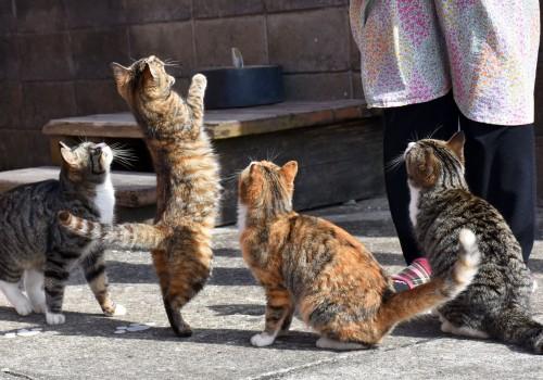 cats cat island
