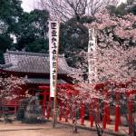 Discover Ogi – the little Kyoto of Kyushu