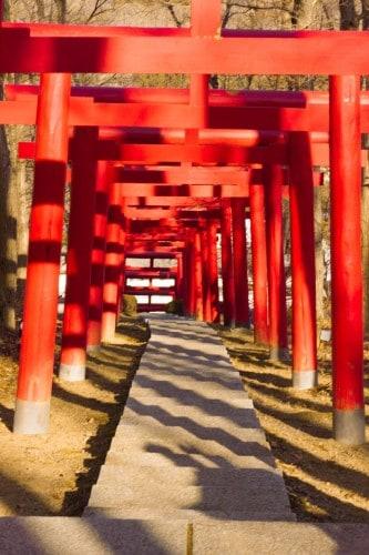 The torii gate leads to the private shrine in Yahata-ya