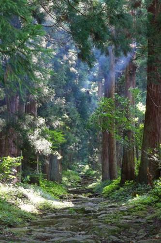 Hiking trail to Kosuge Shrine