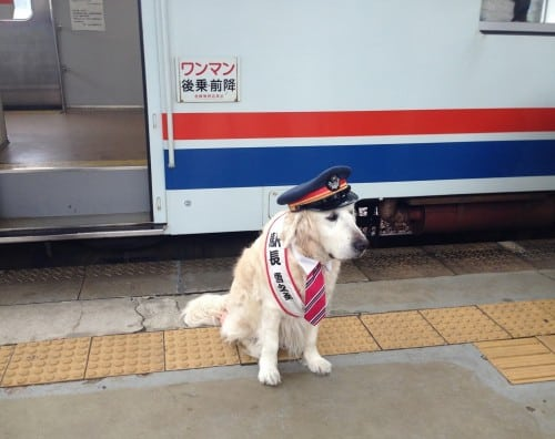 The doggy train staff?? in Mino city