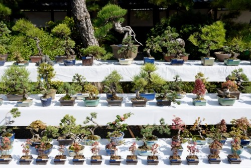 """Bon-sai(盆栽) literally translates to """"tray planting,"""" which is exactly what the art of bonsai is."""