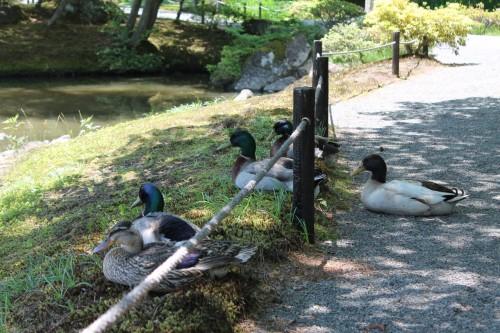 Jorakuen Japanese Garden, Fukushima, Japan.