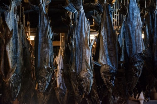 Salmon Left to Dry in Murakami Kikkawa Salmon Shop
