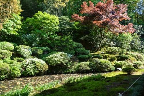 Ryukouin Temple Pond