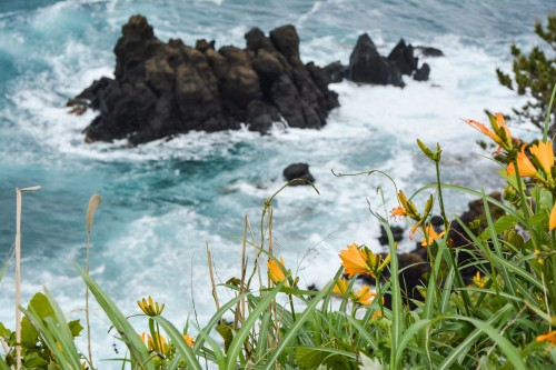 Onogame at Sado island plunges into the sea and offers a beautiful spectacle with millions of yellow flowers.