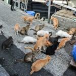 "Cat Island ""Nekojima"" in Japan: Check Out Fukashima in Oita !"