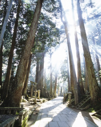 Mount Koya - The Head Temple of Esoteric Buddhism, Japan.