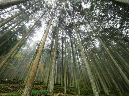 Kokemushiro Café in cedar forests