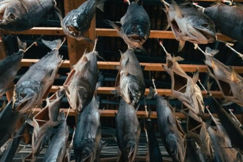 Murakami Salmon Seafood Local Food Niigata Prefecture