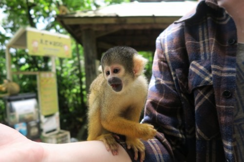 Monkey Park Ishigaki Yaima Village Okinawa Japan Mangrove Animals