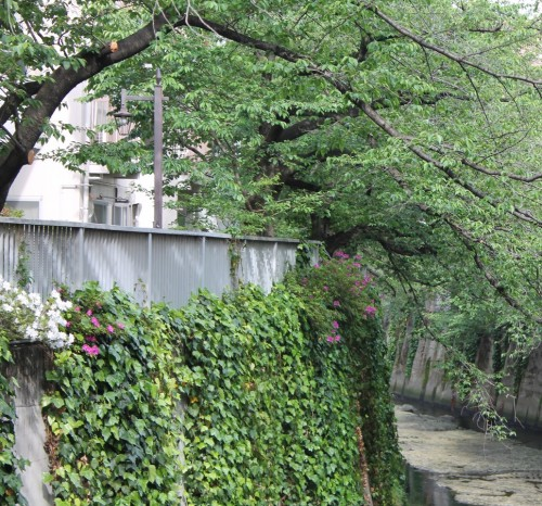 Kagurazaka Neighborhood Guide Kanda River Walking Path Plants Flowers Garden Greenery Tokyo
