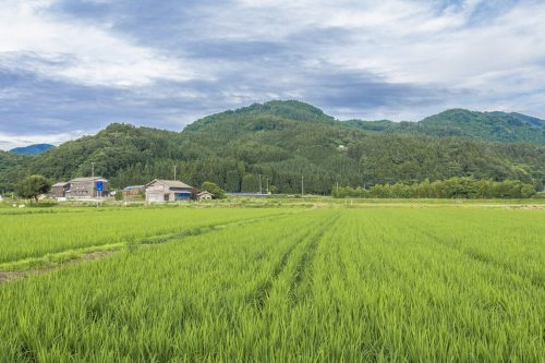 Goushikan Inn Ryokan Traditional Accommodation Local Cuisine Niigata Prefecture Murakami Rice Fields