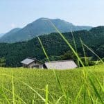 Summer tourism in Toon, Ehime: Rice Terraces and Try Doburoku