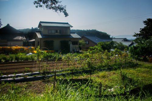 Vegetable garden of a farm near the city of Usuki, Oita Prefecture, Japan