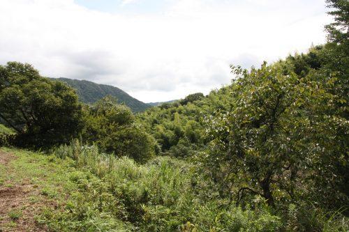 Hiking on Kawara Olle trail in Fukuoka Prefecture, Kyushu, Japan.