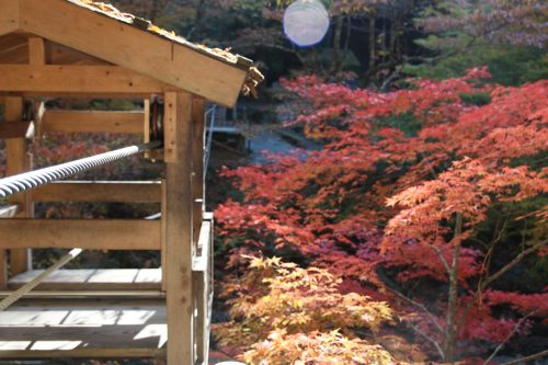 The fall colors seen from Iya Valley's Wild Monkey bridge in Shikoku.