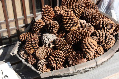 Tray of pine cones in Udatsu.