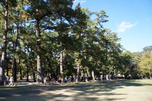 Izumo-taisha, Izumo Great Shrine, San'in Region, Shimane Prefecture, Japan