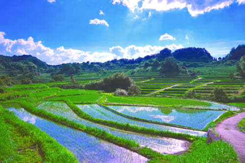 The flooded rice fields of Inabuchi Tanada on a sunny summer day in Asuka