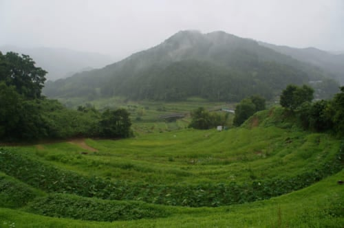 Terraced fields under the rain, in Asuka, Nara