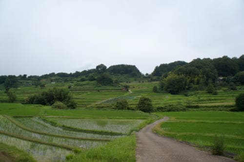 The terraced rice fields of Inabuchi Tanada in Asuka (Nara), crossed by a small path