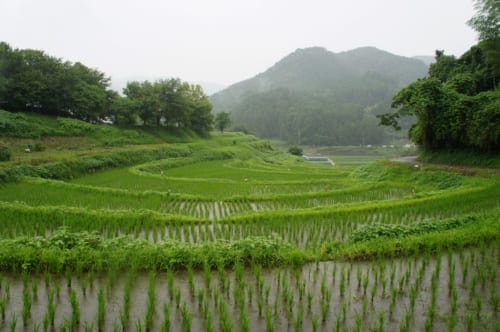 Asuka: a view of the terraced rice fields of Inabuchi Tanada under the rain